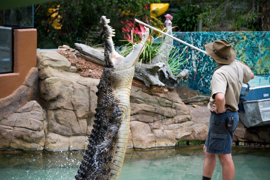 Shrek the crocodile is one of the biggest stars at Billabong Zoo in Port Macquarie.
